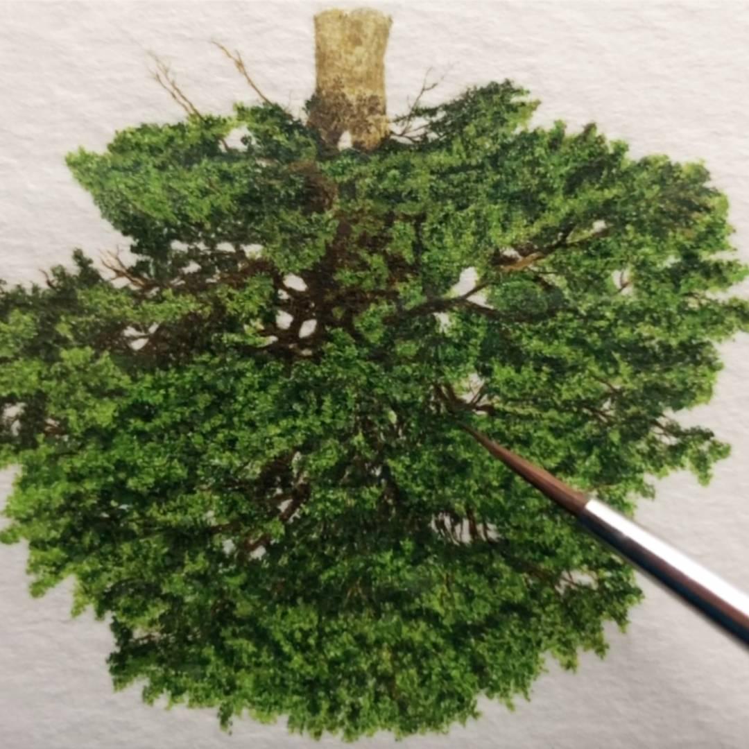 art contemporain arbre miniature aquarelle sur papier 36 exemples d'arborescence philippe jacquin-ravot